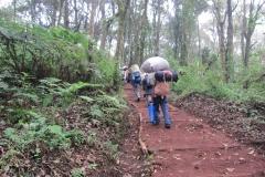 2011-08_Tanzania,_Kilimanjaro007
