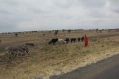 2011-08_Tanzania,_Safari044
