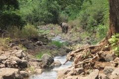 2011-08_Tanzania,_Safari148