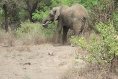 2011-08_Tanzania,_Safari156