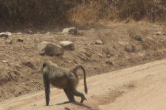 2011-08_Tanzania,_Safari189