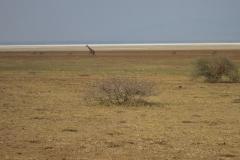 2011-08_Tanzania,_Safari250