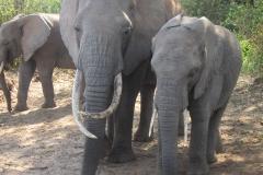 2011-08_Tanzania,_Safari273