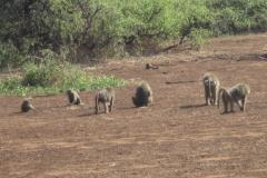 2011-08_Tanzania,_Safari286
