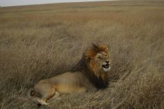 2011-08_Tanzania,_Safari404