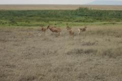 2011-08_Tanzania,_Safari411