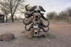 2011-08_Tanzania,_Safari435