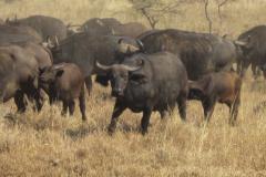 2011-08_Tanzania,_Safari479