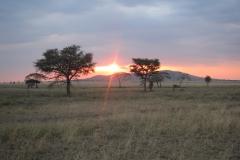 2011-08_Tanzania,_Safari533