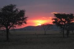 2011-08_Tanzania,_Safari539