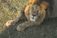 2011-08_Tanzania,_Safari561