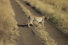 2011-08_Tanzania,_Safari597