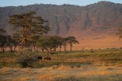2011-08_Tanzania,_Safari628