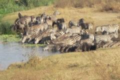 2011-08_Tanzania,_Safari646