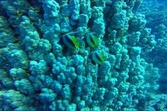 Dive 11 - Sataya02