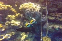 Dive 12 - Claudia05