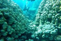 Dive 13 - Fury Shoal Abu Galawa Soghayr02