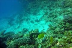 Dive 14 - Shaab Marsa Alam02