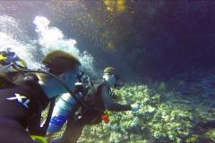 Dive 8 - Gota Soraya07