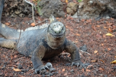 Peru, Ecuador og Galapagos - 584