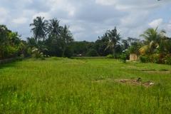 2018-07_Bali_og_Indonesien177