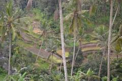 2018-07_Bali_og_Indonesien260