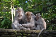 2018-07_Bali_og_Indonesien281